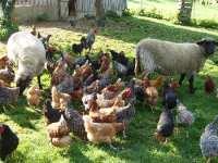 Tiere auf dem Bauernhof Urlaub auf dem Bauernhof in Neustadt an der Aisch Bad Windsheim