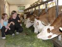 Kühe füttern Familienurlaub in Bayern