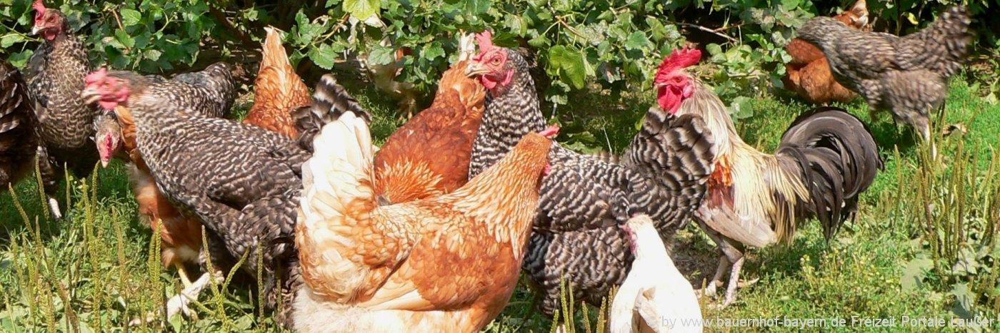bauernhofurlaub-bayern-landferien-tiere-federvieh-hühner-familien-kinderferien